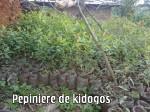 pépinière de Kidogos