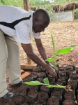 Projet Wilt-bananiers - Visite CADI (13)