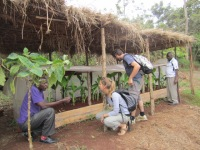 Projet Wilt-bananiers - Visite CADI (15)