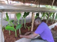 Projet Wilt-bananiers - Visite CADI (5)